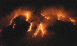 amazon burns