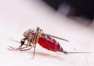 Dengue is spreading widely